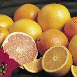 Shipping fresh Florida citrus to europe